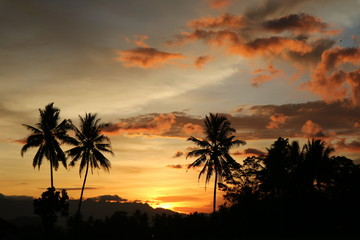 Beautiful Orange Sunset landscape with palm trees