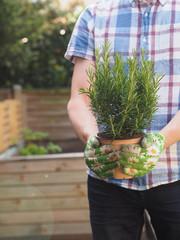 Hobbygärtner mit einer Rosmarin Pflanze vor einem Hochbeet