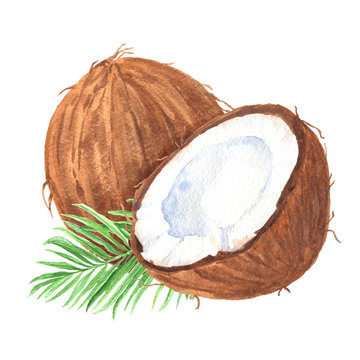 Hand drawn watercolor coconuts composition with green palm leaf, ripe sliced half, food art on white background.