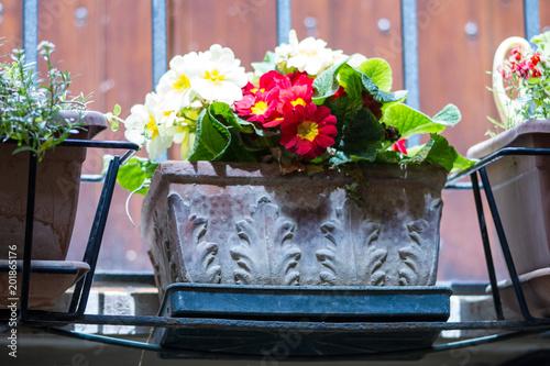 fiori sul balcone in sicilia\