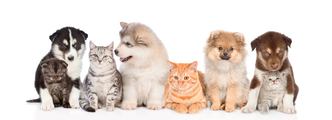 large group of cats and dogs. isolated on white background
