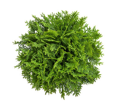 High angle view of a tree, plant isolated on white background