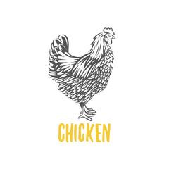 Chicken. illustration, design elements for the chicken manufacturing.