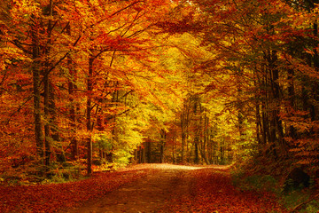 Beautiful sunny autumn landscape with fallen dry red leaves, road through the forest and yellow...