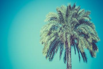 Palm tree on a sky background