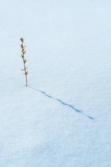 image of dry flower in snow