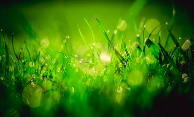 Obraz soczysta zielona trawa pokryta rosą - fototapety do salonu