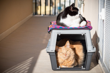 Two cats taking sun, one inside on a cat carrier and one above.