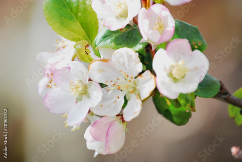 Ramo De Flores Silvestres Stock Photo And Royalty Free Images On