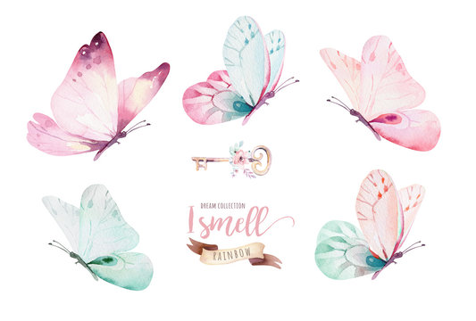 Watercolor colorful butterflies, isolated on white background. blue, yellow, pink and red butterfly illustration.