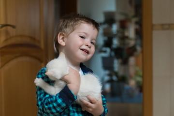 Boy, kitten, home, fun