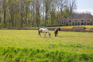 Two horses in a green field in the spring with a beautiful historic building on the background