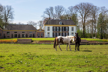 Two horses in a green field in the spring with a beautiful old historic building on the background