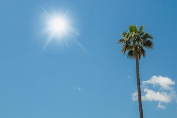 Palme unter blauem Himmel in der Mittagssonne