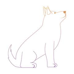cute husky dog icon over background, colorful line design. vector illustration