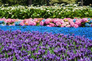 Aiuola con fiori rosa, rossi, viola, azzurri, blu