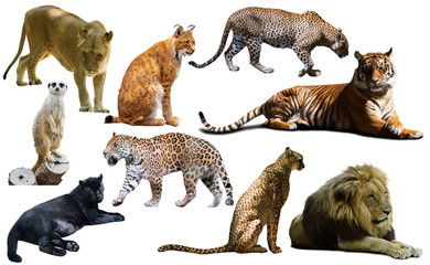 Set of wild mammals isolated over white Wall mural