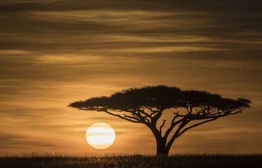 Serengeti Sunrise - The sun rises over the Serengeti grassland under an Acacia tree. Serengeti National Park, Ngorongoro Conservation Area, Tanzania, Africa.
