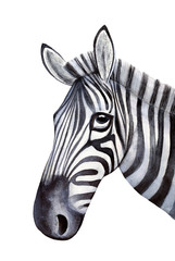 Sketchy portrait of young zebra. Symbol of balance, agility, sureness of path, joy, fun, ability to bear with dignity both white and black stripes in life. Handdrawn water color on white background.