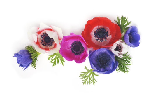 colorful anemones on a white background