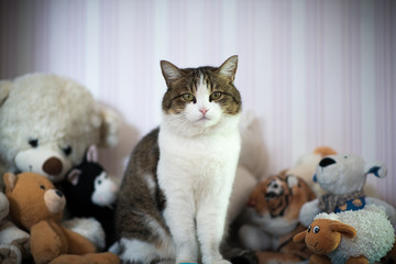 The cat sits next to the soft toys