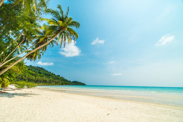 Beautiful nature tropical beach and sea with coconut palm tree on paradise island