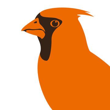 cardinal  vector illustration flat style profile side