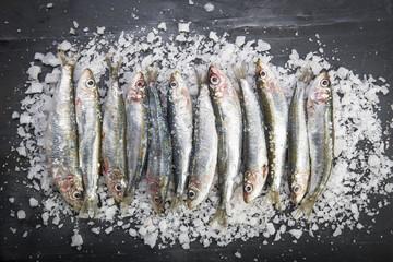 Sardinas frescas crudas sobre un lecho de sal marina, pescado azul para preparar la comida