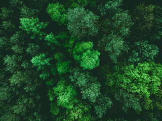 Fotobehang Bossen Low flight over young forest at spring