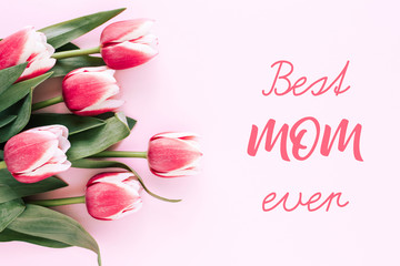 Mother's day greeting card with six pink tulips on pink background and iscription Best mom ever. Top view, copy space.