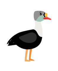 Eider cute cartoon bird