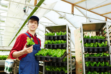 Portrait of young handsome Caucasian man in working uniform holding healthy lettuce grown in greenhouse and smiling at camera
