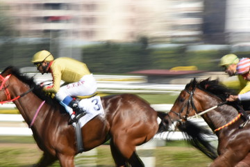 Two racing horses competing with each other