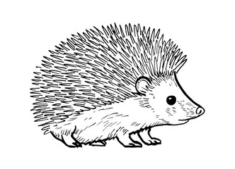 Drawing of hedgehog - hand sketch of mammal, black and white illustration