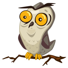 Owl bird cartoon vector illustration isolated on white background.