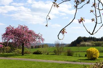 Frühling, Kirschbaum, Landschaft