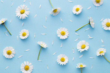 Poster Madeliefjes Daisy pattern. Flat lay spring and summer chamomile flowers on a blue background. Repetition concept. Top view