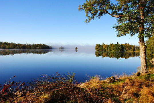 Idyllic view of morning fog on a lake in Smaland, Sweden, against a clear blue sky with a woodland shore in front and in the background, that is reflected in the water