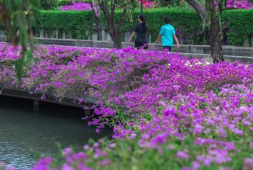 Blooming flowerbeds at the Benjakiti (Benjakitti) Park