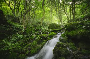 forest river, green natural landscape