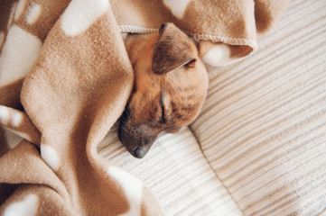 puppy sleeping on the couch with a brown blanket