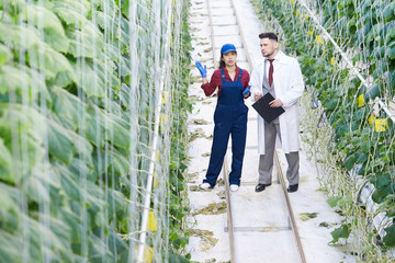 Wide angle portrait of chief supervisor talking to female worker while examining plants in greenhouse of modern vegetable plantation, copy space