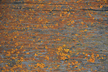 Patterns of multi-colored lichen on wooden surfaces