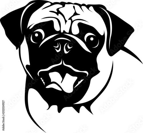 """crazy pug  verrückter mops"" stockfotos und lizenzfreie"