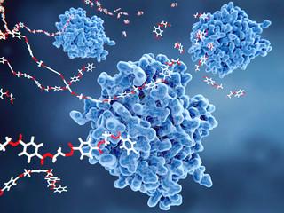 PETase-Enzymen bauen PET-Molekülen zu monomeren Bausteinen ab. Die PETase ist ein bakterielles Enzym mit Plastik-Recycling Potential.