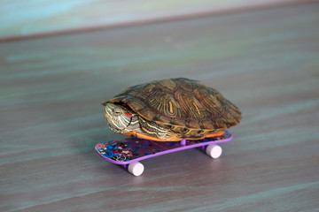 Hand turtle is riding a skateboard.