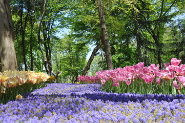 Colorful Flowers in Forest