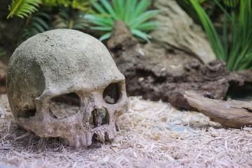 Aquarium decoration: stone human skull .
