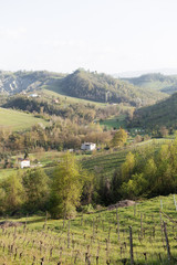 The lush green landscape of Emilia Romagna in Italy