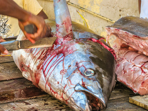 Close-up of fisherman's hands cutting with machete a bloody yellowfin tuna on the fish market table in Grand Baie, Mauritius island, Indian Ocean. Typical life scene.